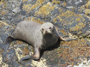 seal-basking-on-the-rocks